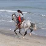 конные прогулки у моря