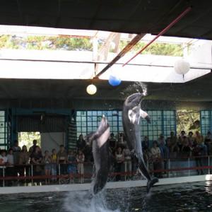 дельфинарий в судаке коктебеле
