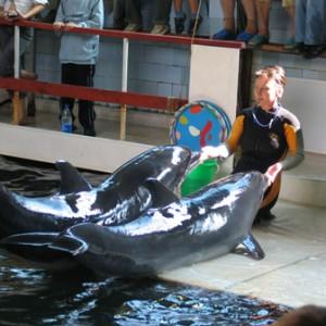 Дельфинарий в Судаке